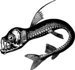 real_sea_monster